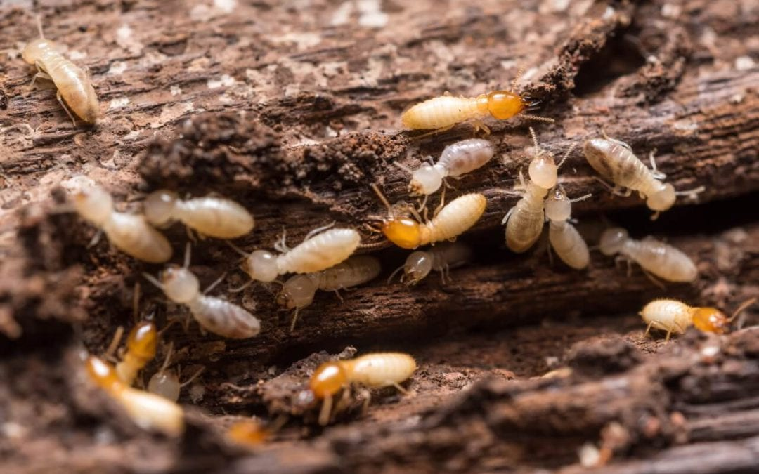 Tunnels and galleries indicate termites in the home
