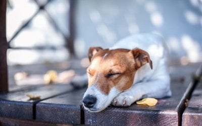 How to Make Your Deck Safe for Children and Pets