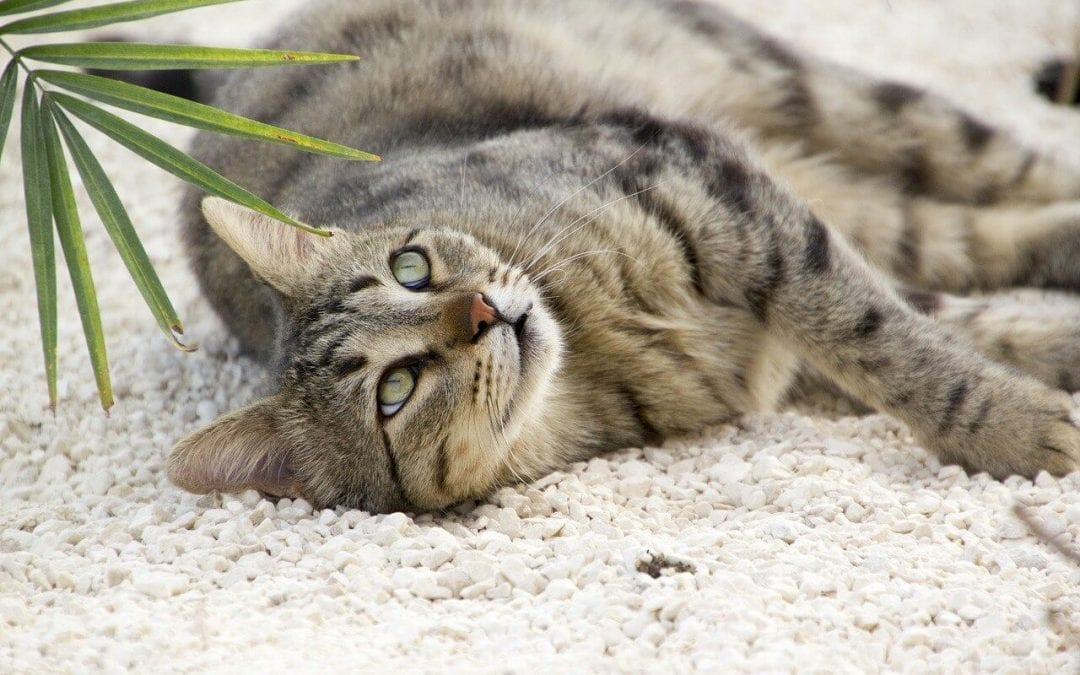 non-toxic houseplants for pets